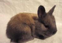 French Angora Rabbits - Fall/Winter 2019 at  for 35